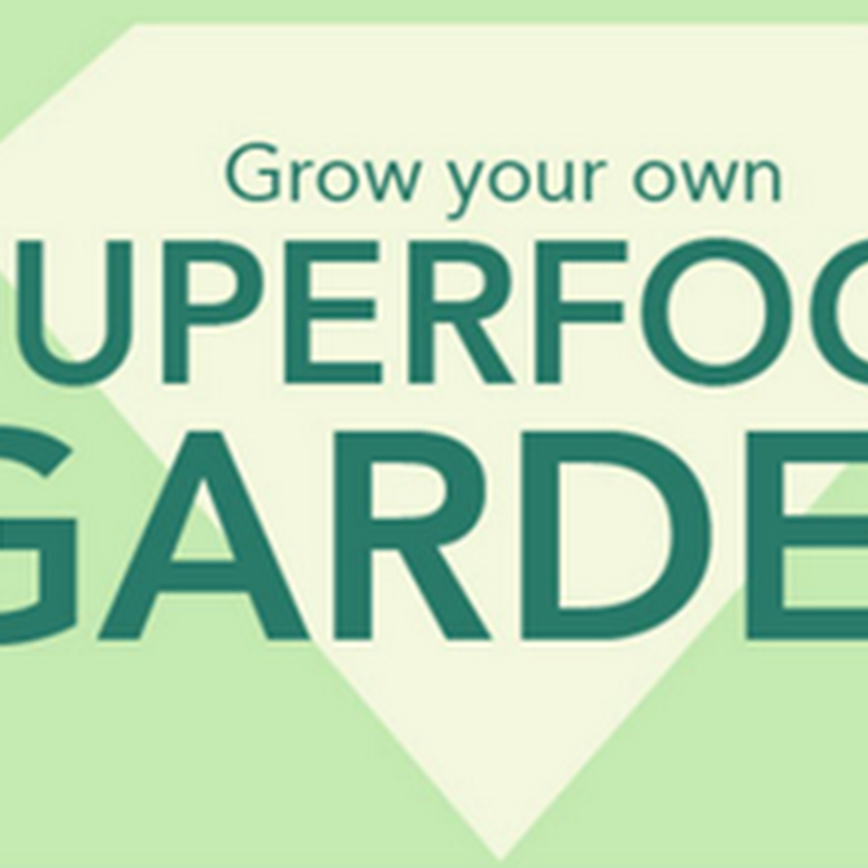 INFOGRAPHIC: GROW YOUR OWN SUPERFOOD GARDEN