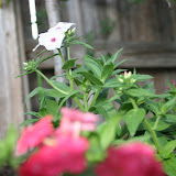 Gardening 2012 - IMG_2797.JPG