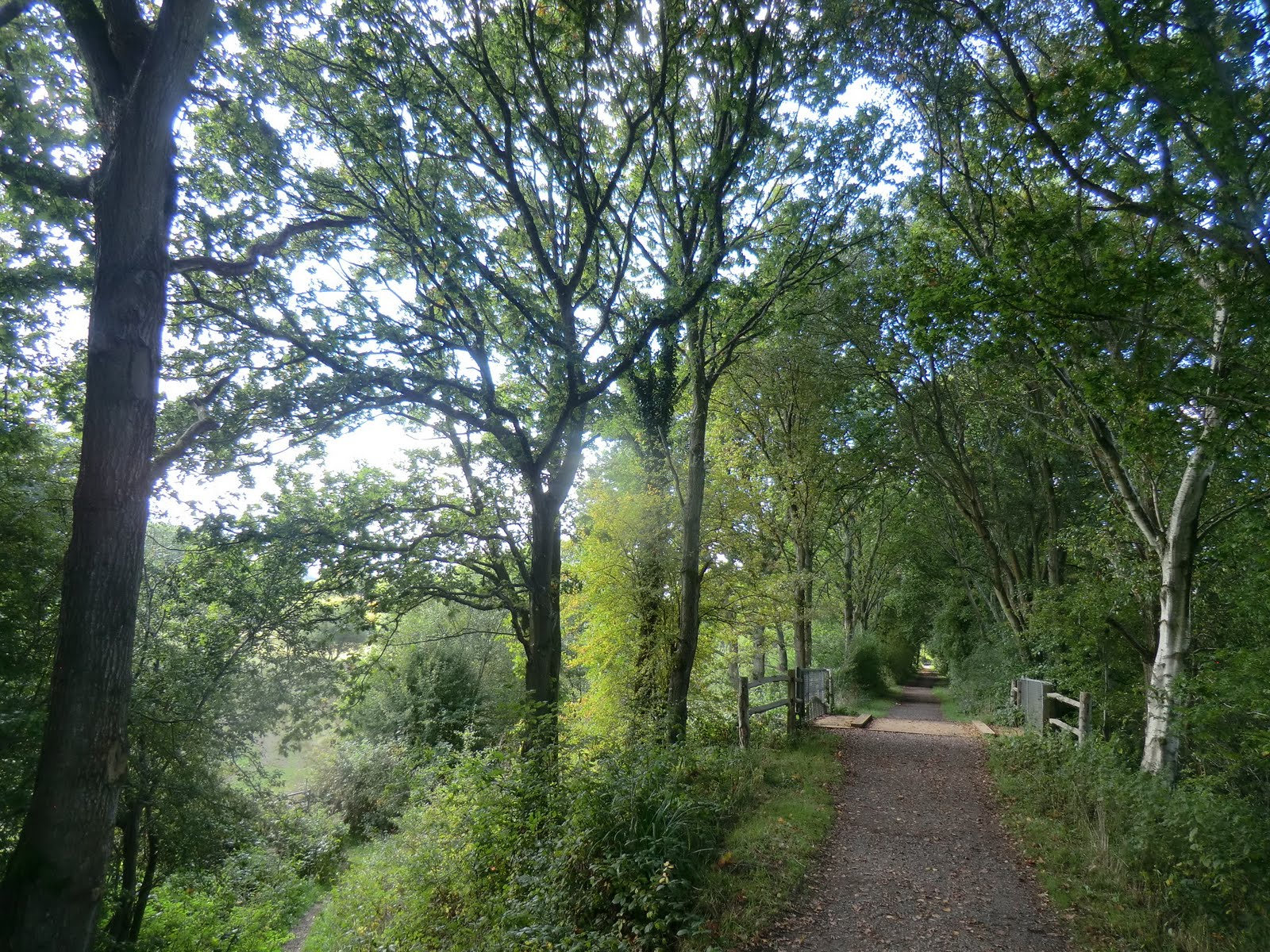 CIMG0697 Along the Forest Way
