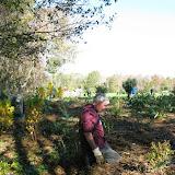 Guilford Salt Meadows Sanctuary Planting - IMG_7819.JPG