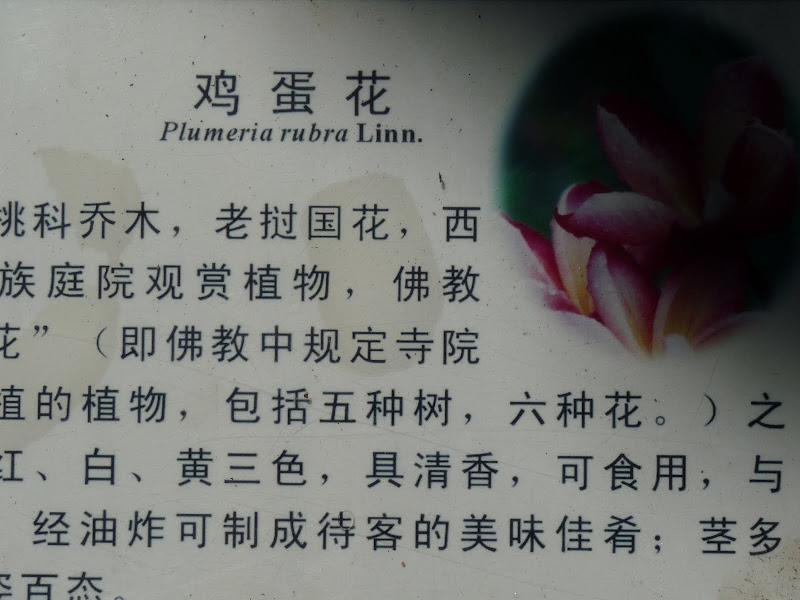 Chine .Yunnan . Lac au sud de Kunming ,Jinghong xishangbanna,+ grand jardin botanique, de Chine +j - Picture1%2B590.jpg
