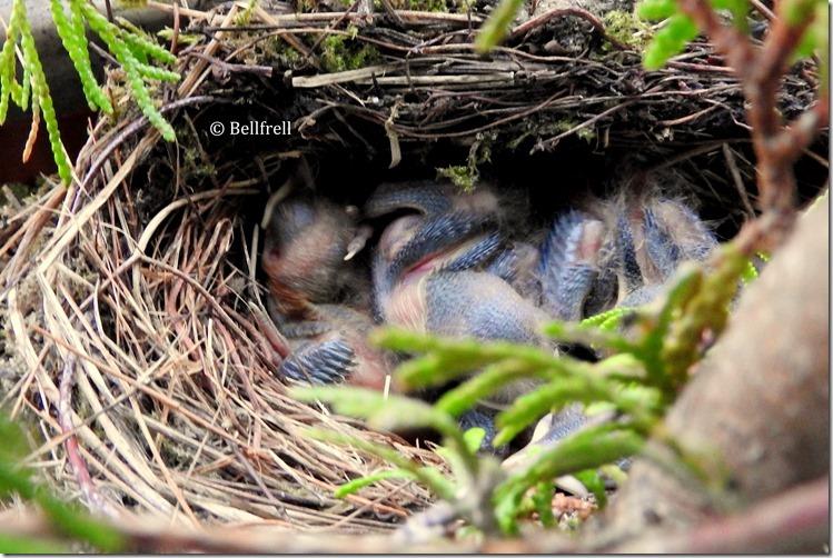 Im schiefen Nest am dritten Tag