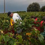 2013 vendanges du chardonnay - 2013%2B09%2B28%2BGuimbelot%2Bvendanges%2Bdu%2BChardonnay%2B112.jpg
