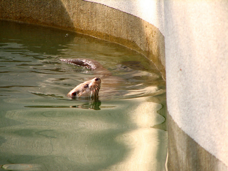 Warszawskie zoo - img_6431.jpg