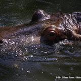 04-07-12 Homosassa Springs State Park - IMGP4530.JPG