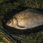 20160612_Fishing_Pryvitiv_045.jpg