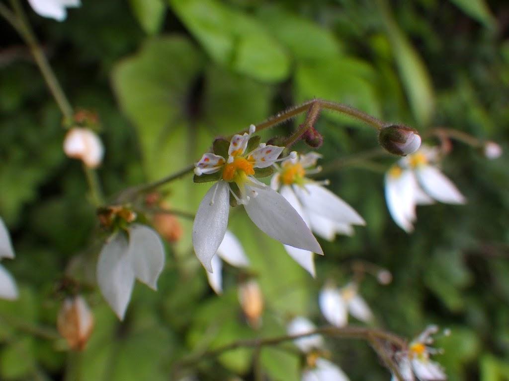花の斑点2