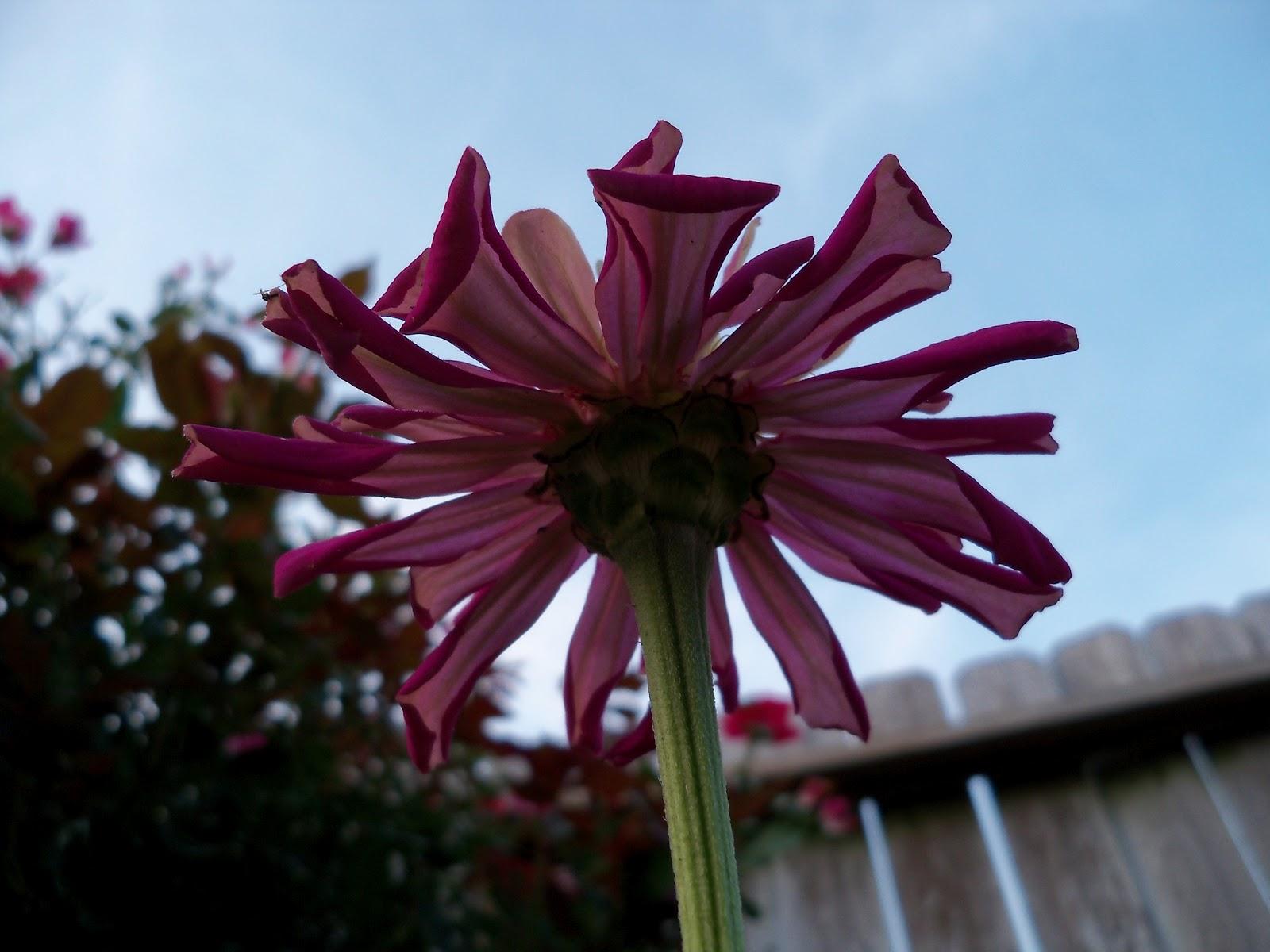 Gardening 2012 - 115_2042.JPG