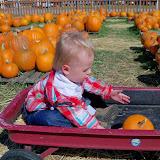 Pumpkin Patch - 115_8253.JPG