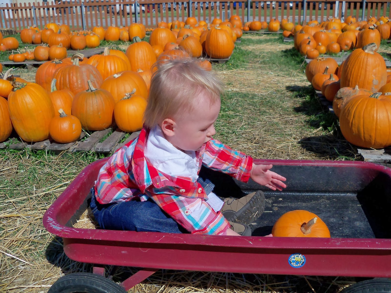Pumpkin Patch - 115_8253.JPG