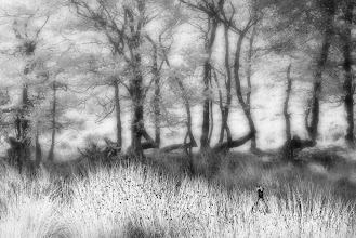 Photo: Exmoor Grasses and Pheasant (© Clive Haynes)