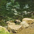 Tortugas en la laguna