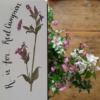 Red Campion and bouquet :: www.AliceDrawsTheLine.co.uk