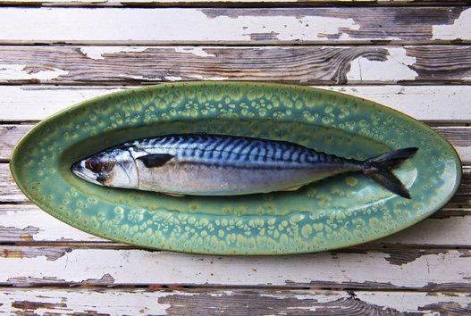 makarel merupakan ikan yang dapat membantu menyuburkan