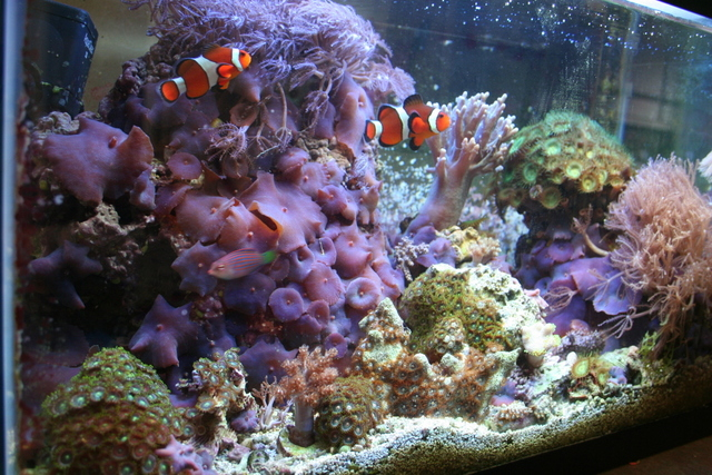 Maggie 39 s world according to me my current fish tank for Saltwater fish online