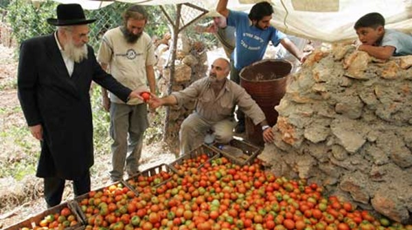 jews farming arabs for oranges in palestine