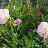 2013 Spring Flora & Fauna - IMGP6347.JPG