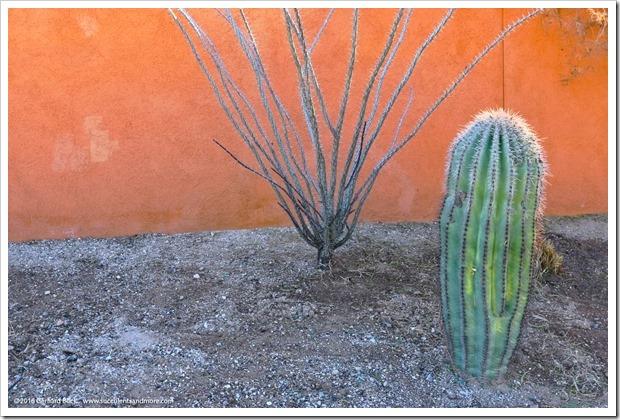151230_Tucson_Tohono-Chul-Park_0068