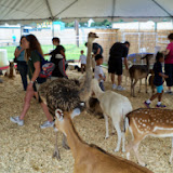 Fort Bend County Fair 2014 - 116_4307.JPG