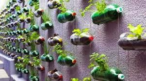 taman vertikal dari botol bekas