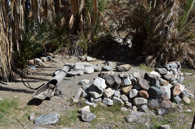 palm camp