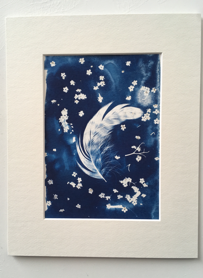 Cyanotype print of feather and flowers.