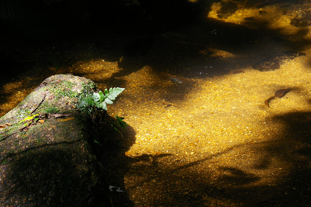 Petit cours d'eau à Caçandoca (Ubatuba, SP), 23 février 2011. Photo : J.-M. Gayman