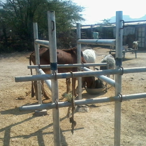 Drenching Cattle For Drenching Cattle And