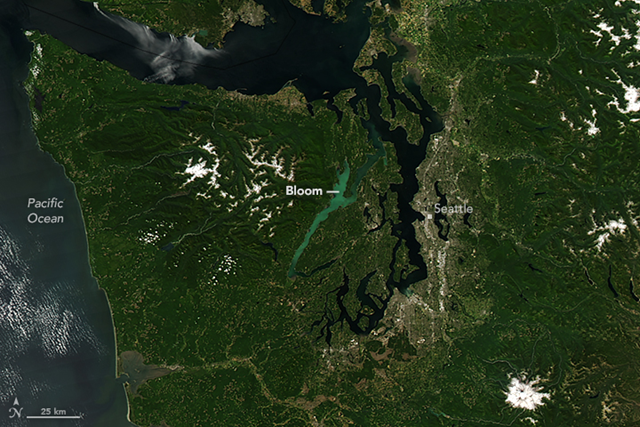 On 24 July 2016, the Moderate Resolution Imaging Spectroradiometer (MODIS) on NASA's Aqua satellite acquired a natural-color image (top) of a phytoplankton bloom in Hood Canal—a fjord in Washington's Puget Sound. Photo: Jeff Schmaltz /LANCE/EOSDIS Rapid Response