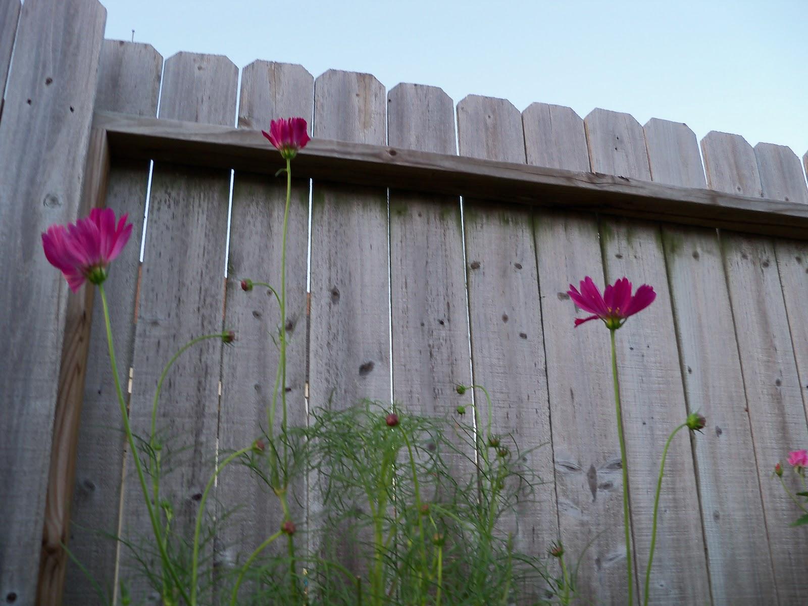 Gardening 2010, Part Three - 101_3972.JPG