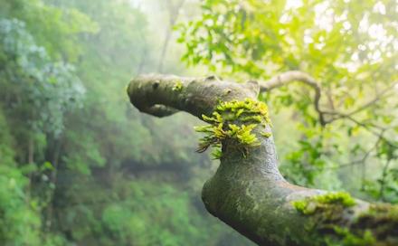 Σχεδόν ένα στα τρία δέντρα κινδυνεύουν με εξαφάνιση στη Γη
