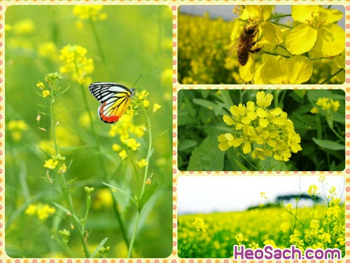 Hình 10 - Hướng dẫn cách sử dụng phần mềm ghép ảnh Fotor