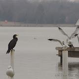01-26-13 White Rock Lake - IMGP4373.JPG