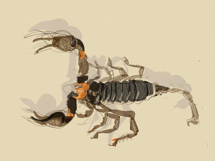 scorpion made with Sketches