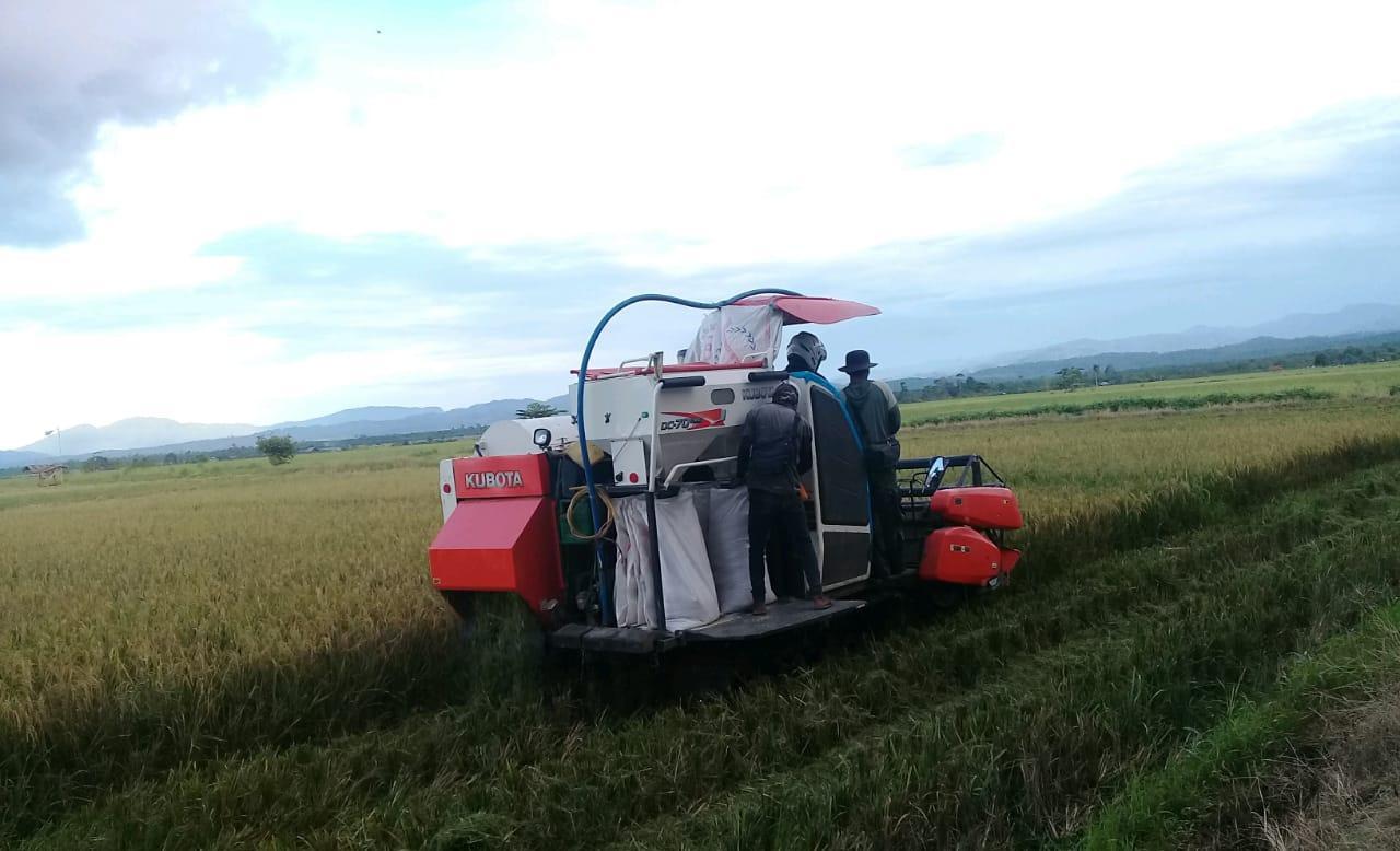 Gunakan Combine Harvester, Petani Organik Morowali Percepat Panen