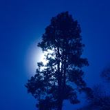 A cold winter's moon hides behind a lone tree.