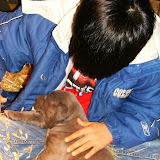 Star & True Blues February 21, 2008 Litter - HPIM1027.JPG