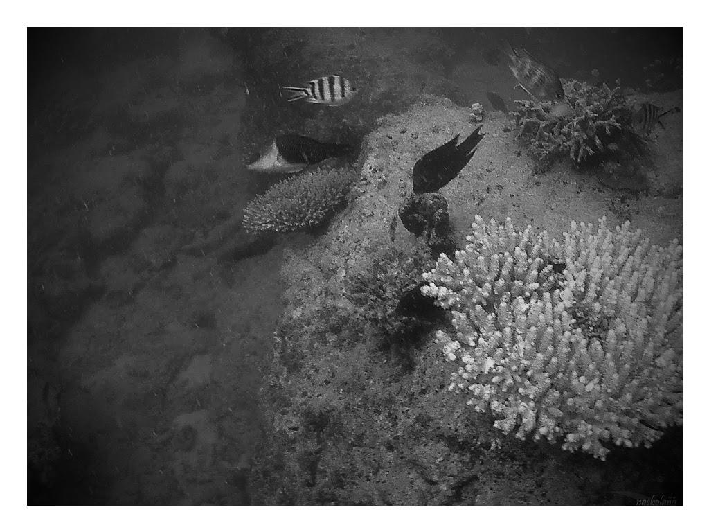 family trip pulau pari 090716 GoPro 49-EFFECTS