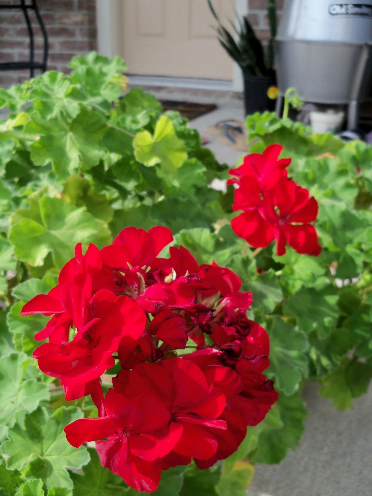 Gardening 2011 - 100_7538.JPG