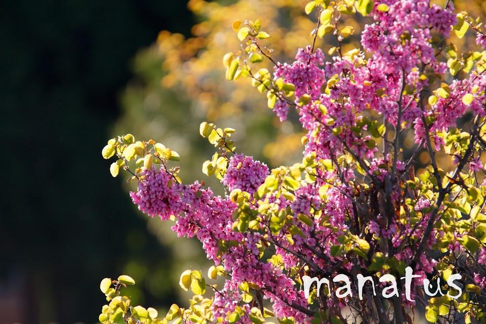 manatus foto blog flores