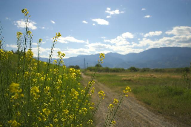 ニッコールオートN.C.24mm 菜の花の咲く道