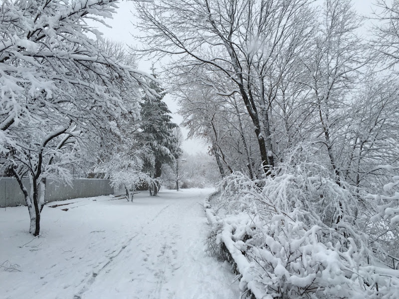 Picture of a snowy bike path.