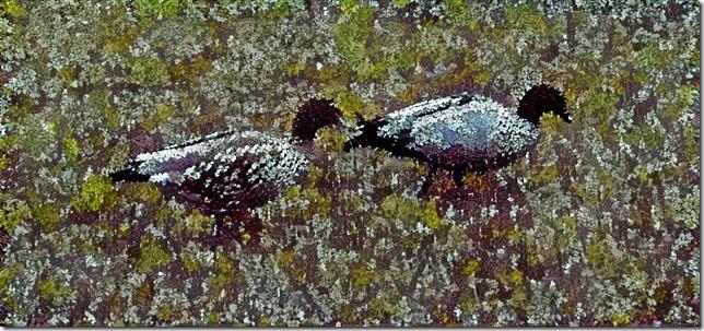 Double Ducks