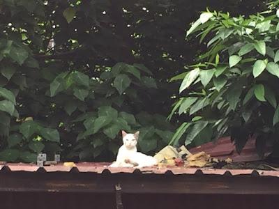 屋根の猫4