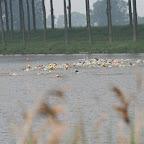 Sente 2008 site (16).JPG