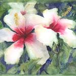 168 White Hibiscus.jpg