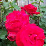 Gardening 2011 - 100_7378.JPG