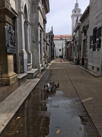 Buenos Aires. Ricoleta Cemetary. Resident cat.