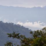 Los Cedros, 1400 m, Montagnes de Toisan, Cordillère de La Plata (Imbabura, Équateur), 19 novembre 2013. Photo : J.-M. Gayman