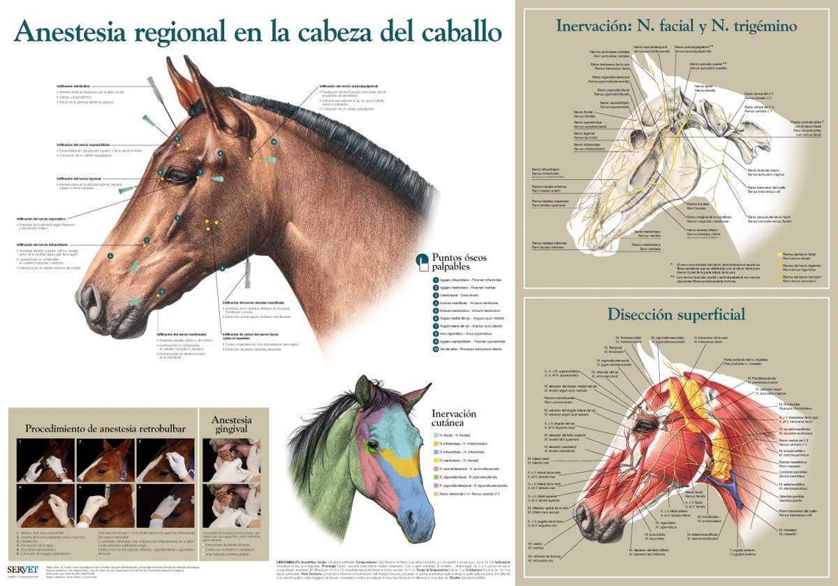 MIRA COMO SE HACE: Anestesia General en la cabeza del caballo